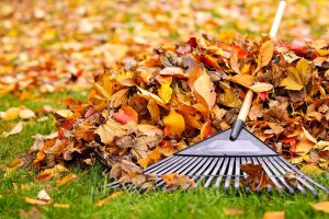 Leaf removal and fall cleanup service, landscape maintenance