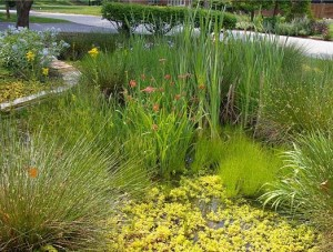 RainScape Rain Garden Example