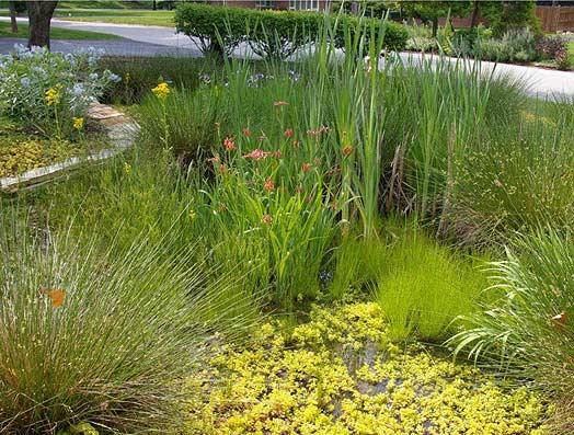 RainScape Rain Garden Example