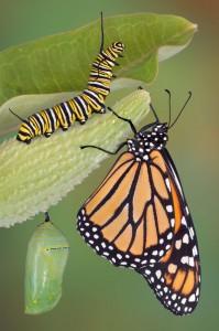 plant butterfly garden, landscape design