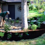 rain garden after landscaping