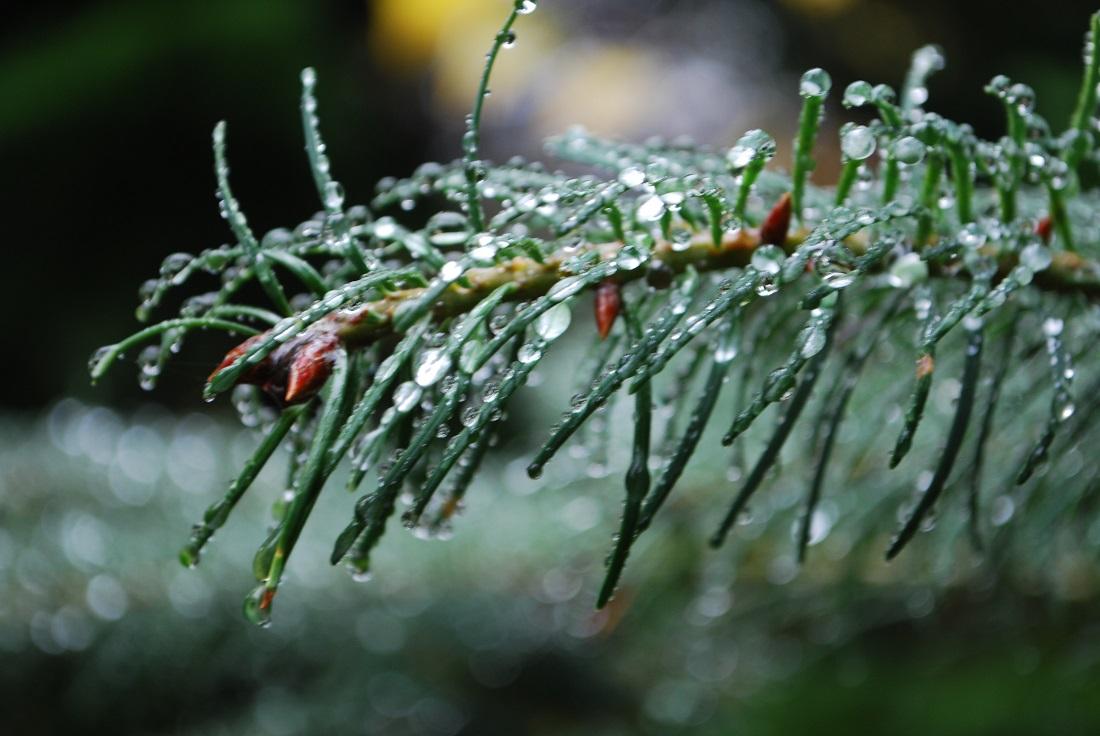 Winter-hiking-evergreen - Copy