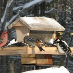 bird feeder tips st. louis