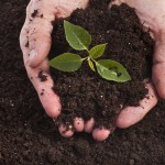 garden soil additives
