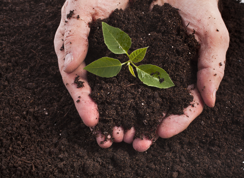 garden soil additives - Garden Soil