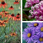 midwest native plants