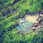 lots of rain in st. louis