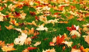 best autumn lawn care