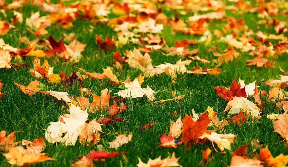 best autumn lawn care