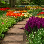 Stone path winding in spring flower garden with blossoming flowers