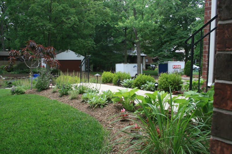 foundation plantings st louis landscaping service st louis
