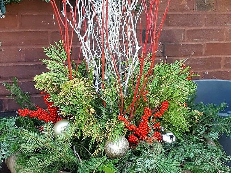 Holiday Potted Plants