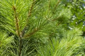 Tree selection, expert landscape design st louis
