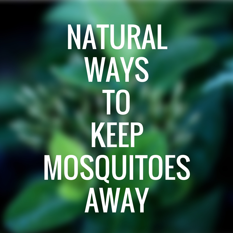 Natural Ways To Keep Mosquitoes Away
