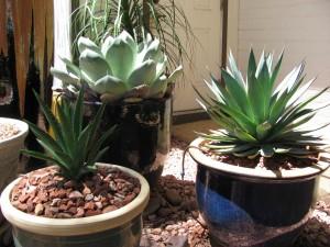 bring in outdoor plants