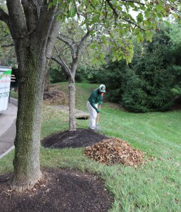 leaf collection schedules