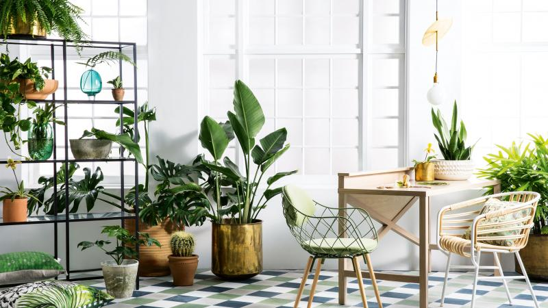 The Best Indoor Plants For Low Light