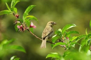 native plants support wildlife like birds