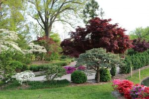 Missouri Botanical Garden Landscape