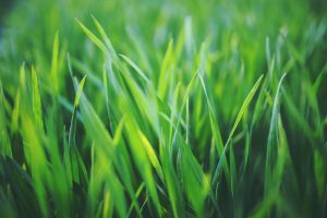 best lawn care st louis