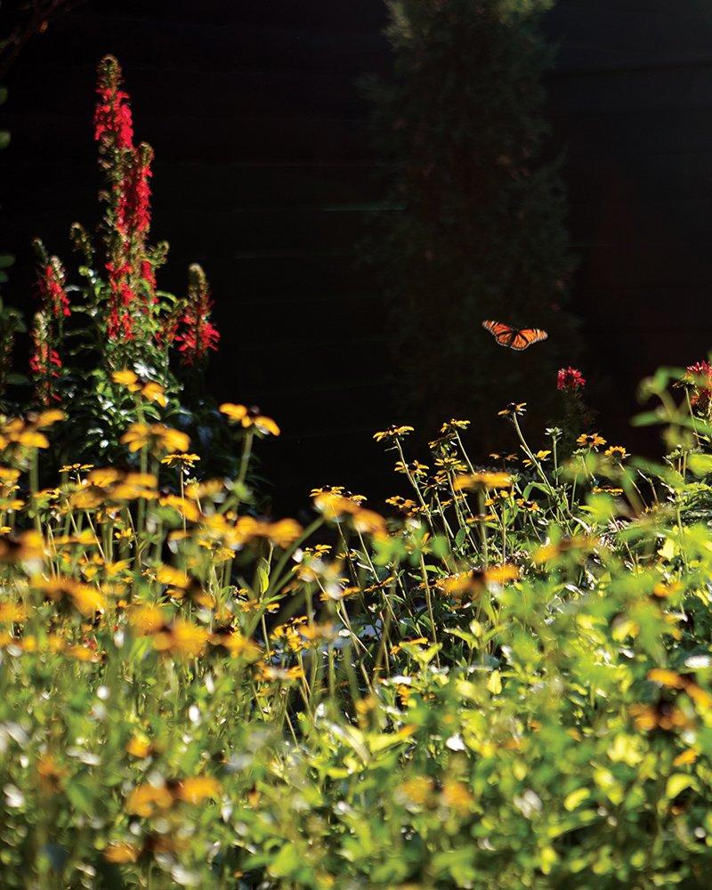 native plants st louis