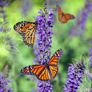 best plants for pollinators