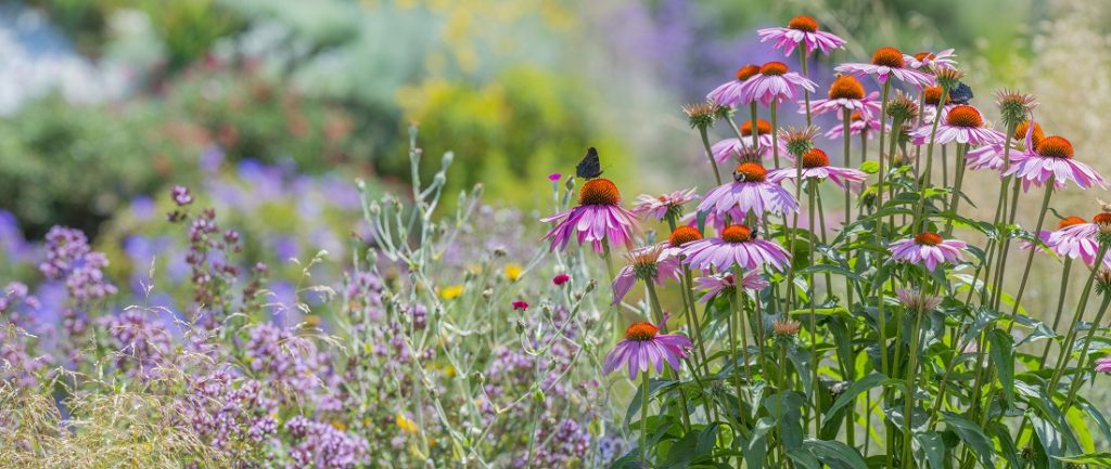 best plants for pollinators in St. Louis, MO our landscaping favorites