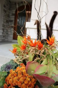 container gardens for fall