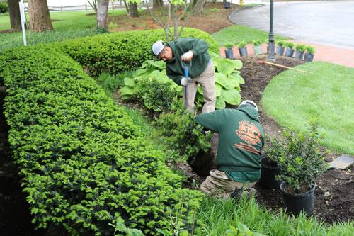 Landscape Maintenance St Louis | Landscaping Services St Louis