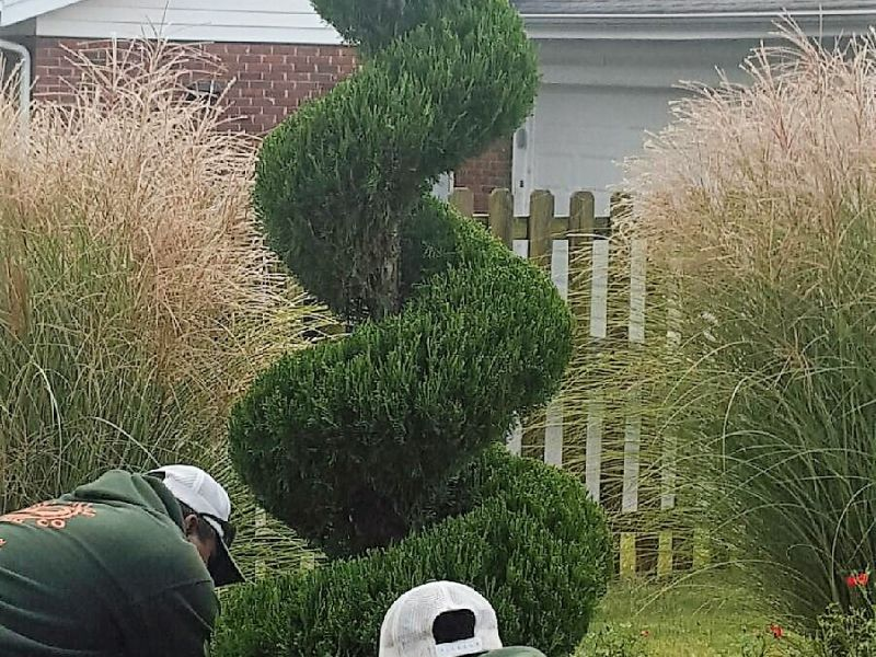 Trimmed Evergreen